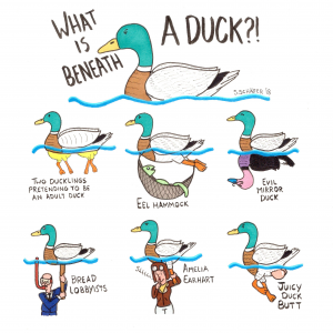 What is beneath a duck?!